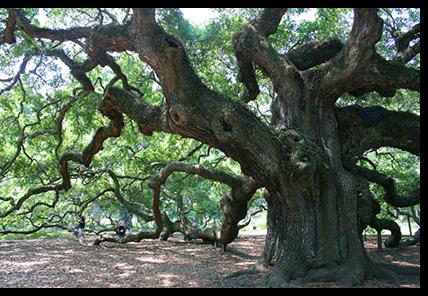 chaostree